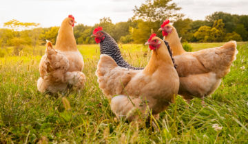 Food quality also requires responsible farming conditions and production methods